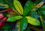 qu'est-ce que la phytothérapie, alternative naturelle