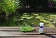 huiles-essentielles-risques-dangers-precautions-phytoetsens